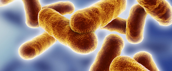 3D-computer artwork of bacillus bacteria. These rod-shaped bacteria (bacilli) are widespread in soil and in the air. Many bacillus bacteria are responsible for food spoilage. Also tetanus, anthrax, botulism and tuberculosis are caused by such bacteria.