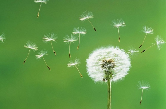 allergie-bambini-polline